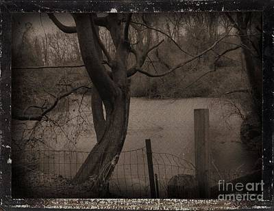 In The Times Of The Hanging Trees Art Print by Roxy Riou