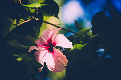 Photograph - In The Tropics by Sara Frank