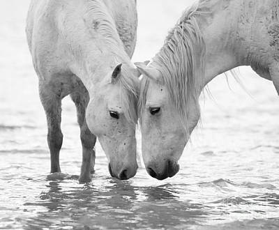 Horses Photograph - In The Water At Dawn II by Carol Walker