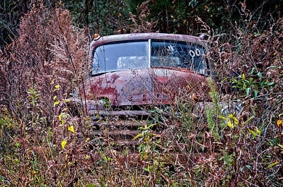 Photograph - In The Weeds by Andy Crawford