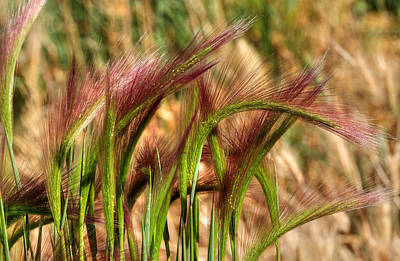Photograph - In The Weeds by Donna Kennedy