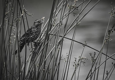 Photograph - In The Weeds by Eric Miller