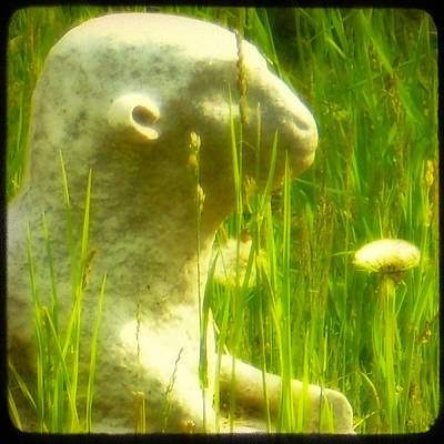 In The Weeds Art Print by Gothicrow Images