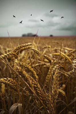 Photograph - In The Wheatfield by Ethiriel  Photography