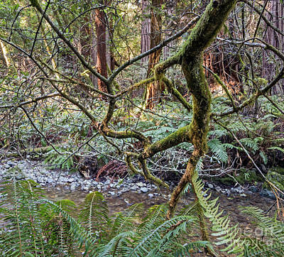 Photograph - In The Woods by Kate Brown