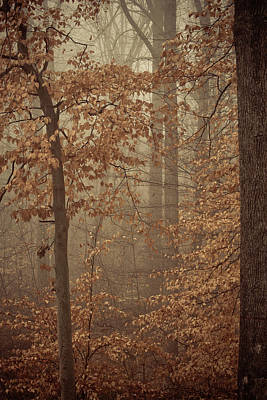 Photograph - In The Woods by Trish Tritz