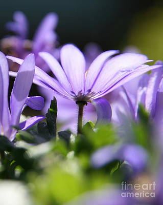 Photograph - Floral Purple Light  by Neal Eslinger