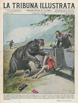 Yellowstone Drawing - In Yellowstone, A Bear Pats A  Woman by Mary Evans Picture Library