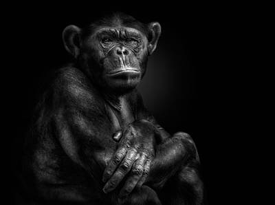 Chimpanzee Photograph - In Your Hands by Pedro Jarque