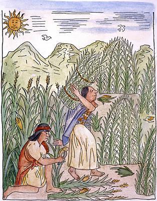 Inca Drawing - Inca Harvesting, C1583 by Granger