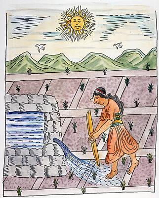 Cornfield Drawing - Incan Farmer, C1583 by Granger