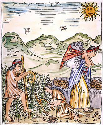 Potato Drawing - Incan Farmersdigging And Transporting by Granger