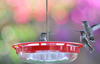 Hummingbird Photograph - Incoming by Lynn Bauer