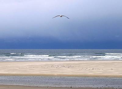 Photograph - Incoming Seagull by Will Borden