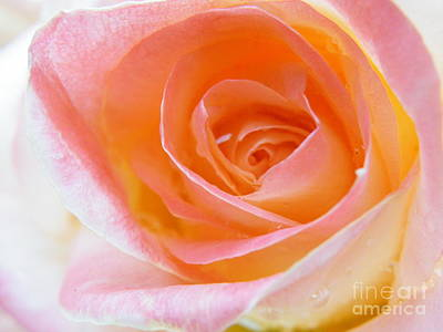 Photograph - Incredible Lightness Of Being A Rose by Brian Boyle