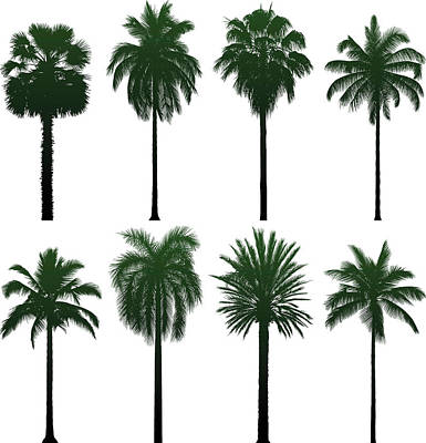 Incredibly Detailed Palm Trees Art Print by Leontura