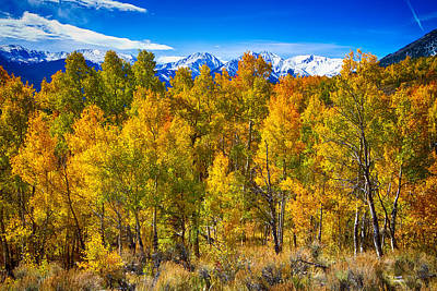 Bo Insogna Photograph - Independence Pass Autumn Colors by James BO  Insogna