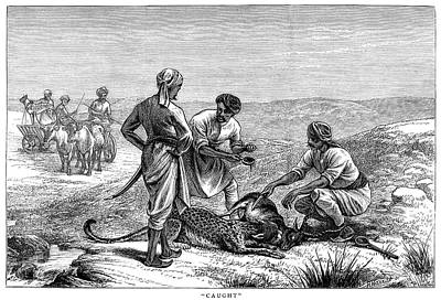 Carcass Painting - India Antelope Hunt, 1872 by Granger
