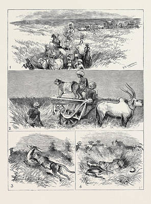 India, Hunting Black Buck With The Cheetah In Baroda 1 Art Print by Indian School