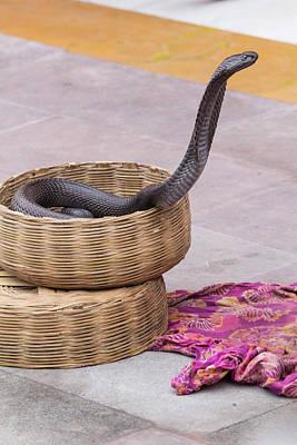 Street Performer Photograph - India, Rajasthan, Jaipur, Snake by Emily Wilson