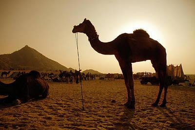 Gypsy Photograph - India, Rajasthan, Pushkar by David Noyes
