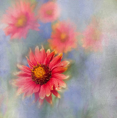 Photograph - Indian Blanket by David and Carol Kelly