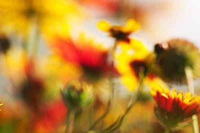 Photograph - Indian Blanket Flowers by Byron Jorjorian