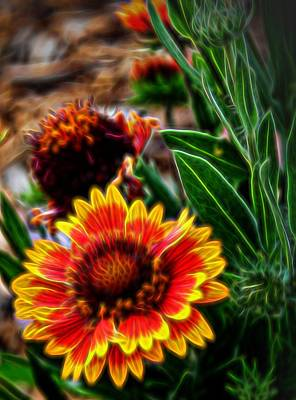 Photograph - Indian Blanket Glow by Judy Vincent