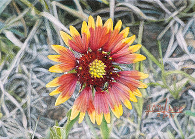 Indian Blanket Art Print by Joshua Martin