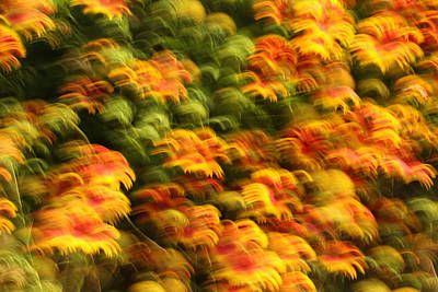 Flower Photograph - Indian Blanket Psychedelic by Andrew McInnes