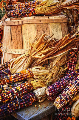 Photograph - Indian Corn by Debra Fedchin