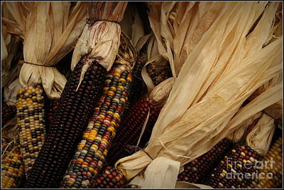 Multicolored Indian Corn  Original