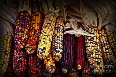 Market Photograph - Indian Corn by Elena Elisseeva