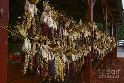 Photograph - Indian Corn Harvest by Barbara Bowen
