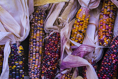 Thanksgiving Art Photograph - Indian Corn Harvest by Garry Gay