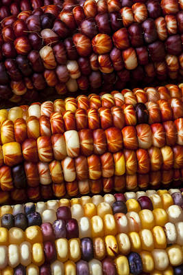 Indian Corn Harvest Time Art Print by Garry Gay