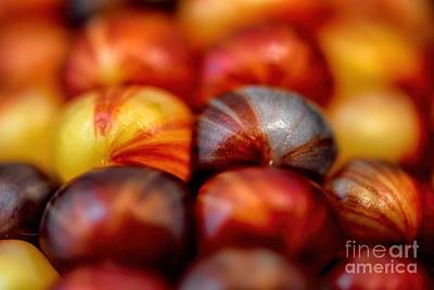 Seed Beads Photograph - Indian Corn Kernel Autumn by Henry Kowalski