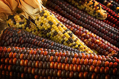 Kitchen Photograph - Indian Corn by Mark McKinney