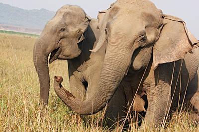 Indian Elephant Expressing Art Print by Jagdeep Rajput