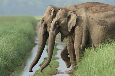 Dirt Roads Photograph - Indian Elephants Crossing The Track by Jagdeep Rajput