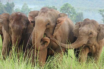 Feeding Photograph - Indian Elephants Feeding,corbett by Jagdeep Rajput