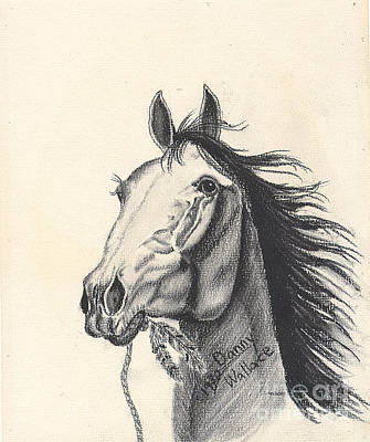 Drawing - Indian Horse by D Wallace