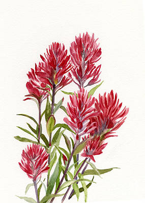 North Cascades Painting - Indian Paintbrush by Sharon Freeman