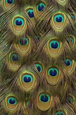 Photograph - Indian Peacock Feathers by Hiroya Minakuchi