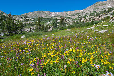 Photograph - Indian Peaks Wildflower Meadow by Cascade Colors