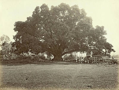 Indian People Under A Large Tree In The Dutch East Indies Art Print