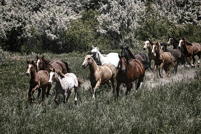 Forelock Photograph - Indian Ponies D8124 by Wes and Dotty Weber