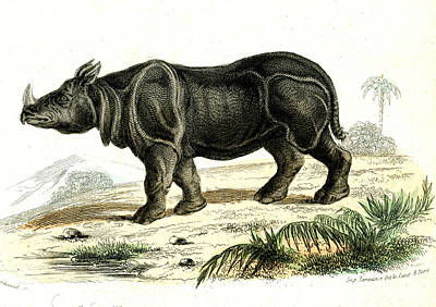 Indian Rhinoceros Art Print by Collection Abecasis