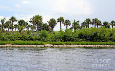 Photograph - Indian River Lagoon Fort Pierce by Megan Dirsa-DuBois