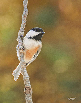 Indian Summer Chickadee Art Print